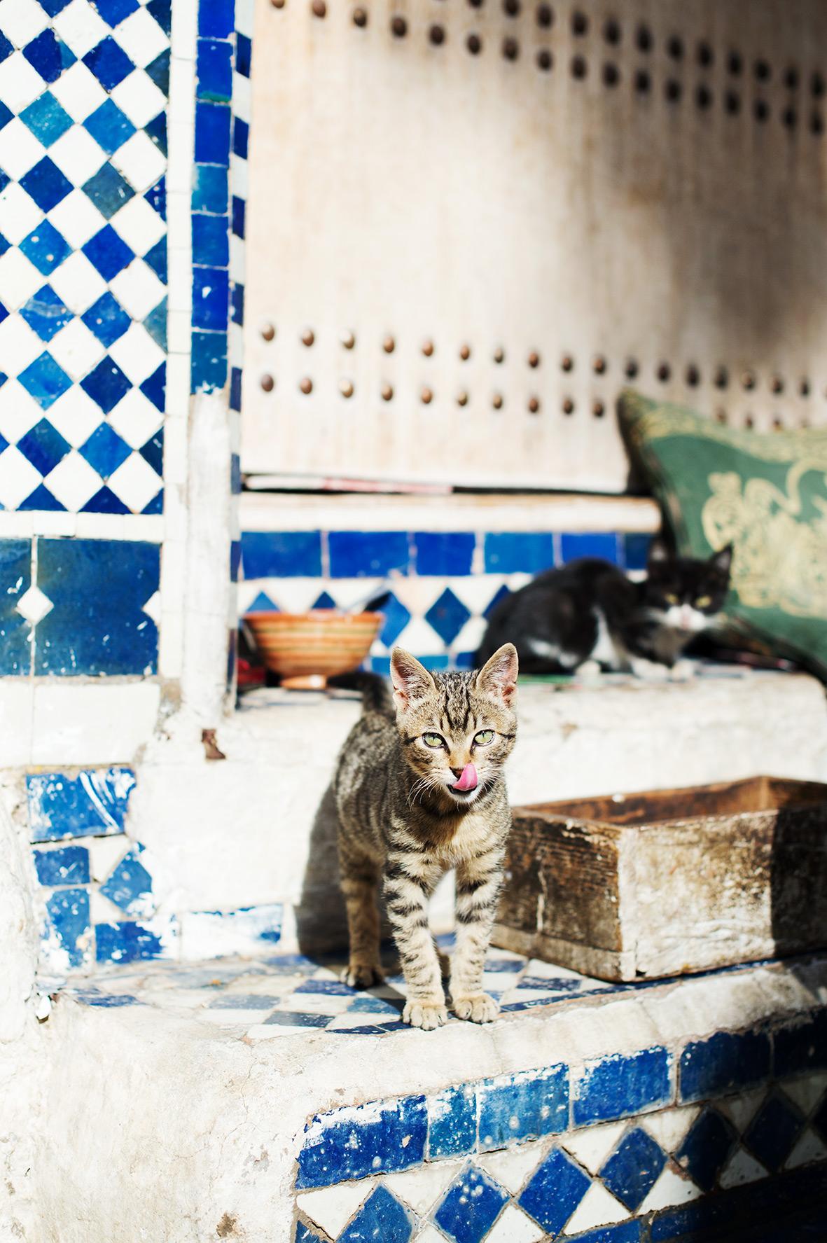 Katze in Fes Marokko, Bild aus Afrika erhältlich im Onlineshop