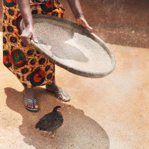 Reis sieben, Bild aus Afrika erhältlich im Onlineshop